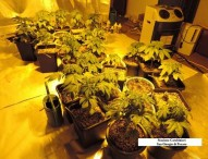 5,2 kg di marijuana