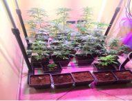 Piantagione di marijuana in casa, arrestato