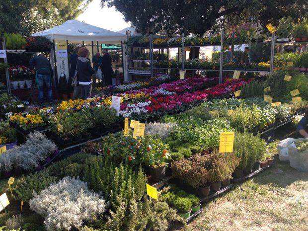 La mostra mercato di fano fiorisce ha colorato i giardini