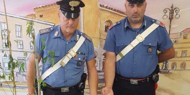 Spaccio: arrestati un grossista e tre pusher, recuperati un etto e mezzo di cocaina e 4 mila euro