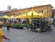 Fano, lavori in piazza Andrea Costa