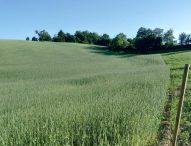 Marche, regione sempre più bio: superati i 98mila ettari, +26% di aziende negli ultimi due anni