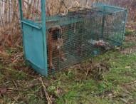 Cane intrappolato in una gabbia, indaga la polizia provinciale