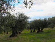 """Quando l'olio Dop Cartoceto incontra l'oliva ascolana del Piceno Dop, al Balì secondo appuntamento di """"Aspettando Cartoceto Dop, il Festival"""""""