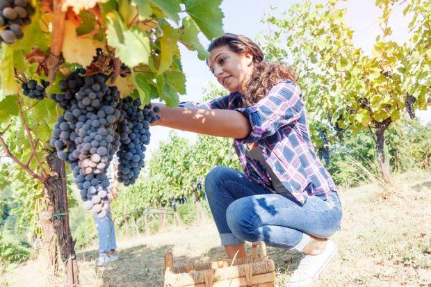 8 Marzo, è rosa più di un'impresa agricola su 4: donne alla guida dell'innovazione in campagna