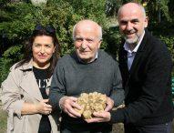 Maxi tartufo bianco da oltre un chilo: tra i più grandi ritrovati in Italia negli ultimi anni