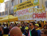 Coldiretti Marche, la protesta di Montecitorio sulla fauna selvatica: 150 incidenti in regione, il 90% per caprioli e cinghiali