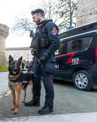Operazione Coffee Break: 4 arresti, sequestro di droga e denaro a Fano e Colli al Metauro, grazie al fiuto del cane One