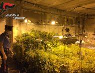 Scoperto capannone trasformato in piantagione di cannabis, arrestato 25enne
