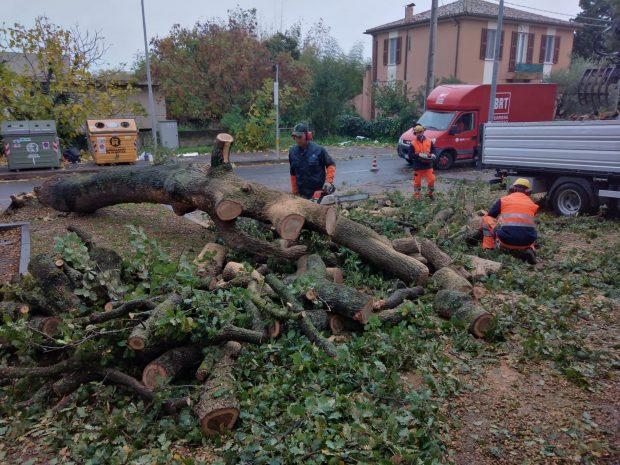 Crollato un grosso albero per il forte vento. L'intervento di Aset