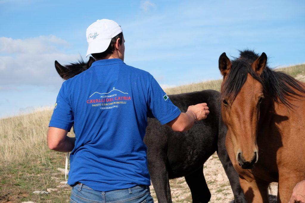 Il Cavallo Del Catria Tra I Protagonisti Della Puntata Di Linea Verde Life Oltrefano It