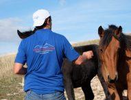 Il Cavallo del Catria tra i protagonisti della puntata di Linea Verde Life