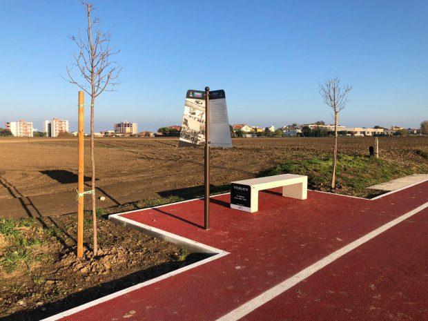 Marotta, Giornata Nazionale degli Alberi: piantumazione di nuove essenze lungo la pista ciclopedonale di Piano Marina